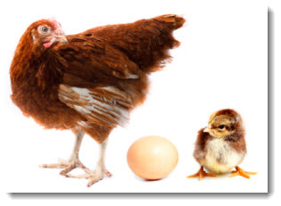 chicken_egg_bsw